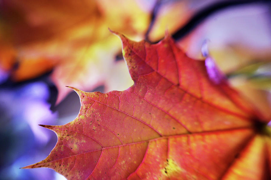 When Autumn Leaves Begin to Fall by Arthur Miller