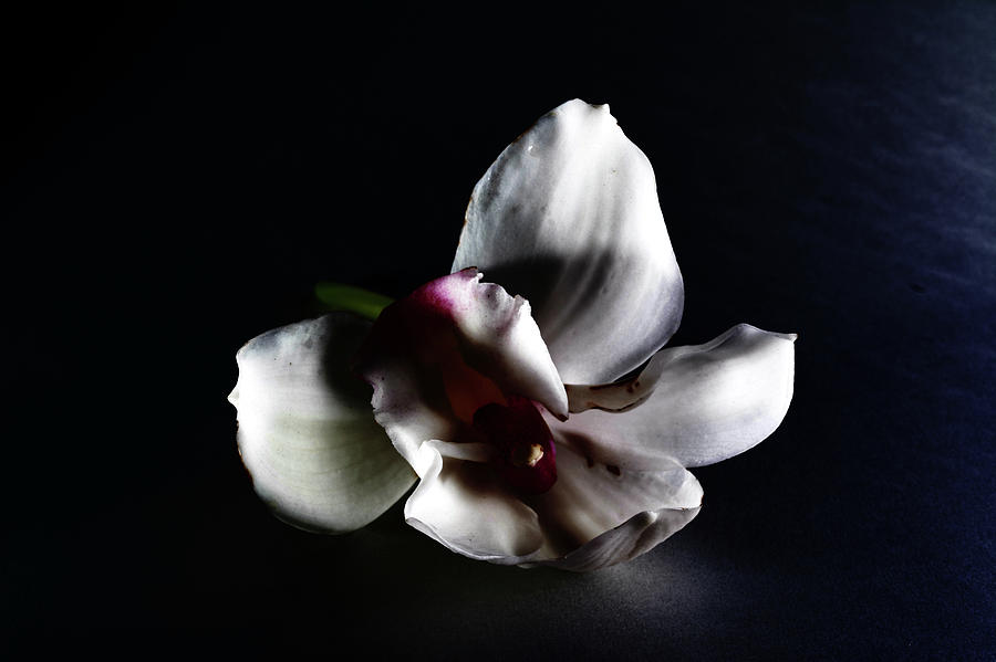 Flower Photograph - when flowers fall II by Paulina Roybal