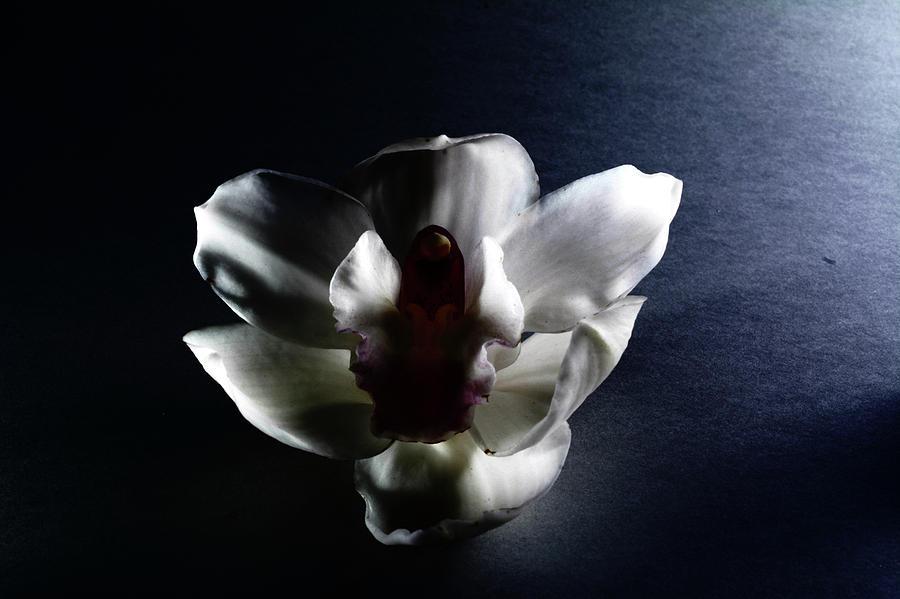 Flower Photograph - when flowers fall III by Paulina Roybal