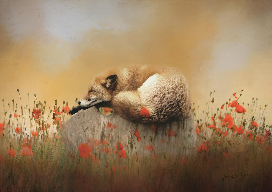 Design Mixed Media - When Foxes Dream by Amanda Jane