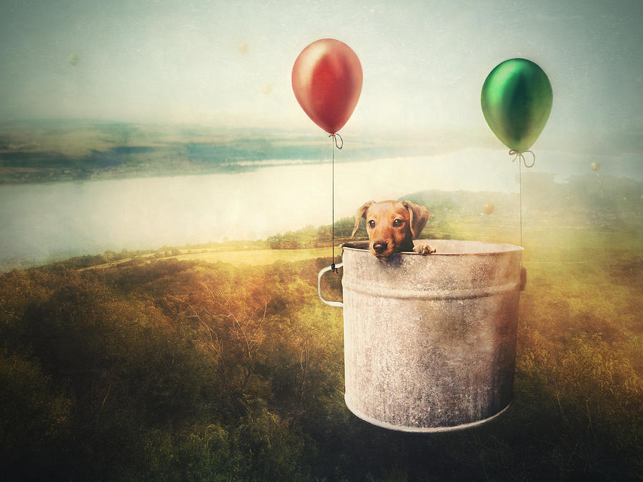 Balloon Photograph - When I Was A Pup... by Vaclav Kindl