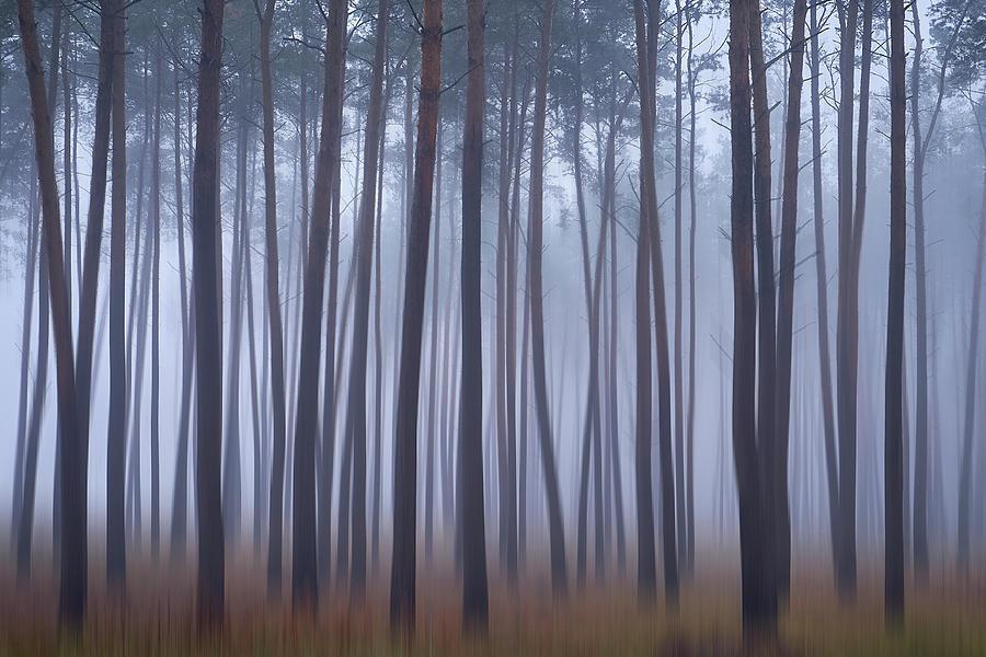 Where dreams inhabit. Horytsya, 2018. by Andriy Maykovskyi