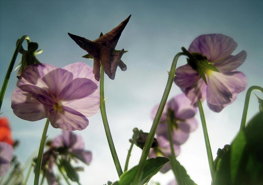 Whispers of Spring by Jaeda DeWalt