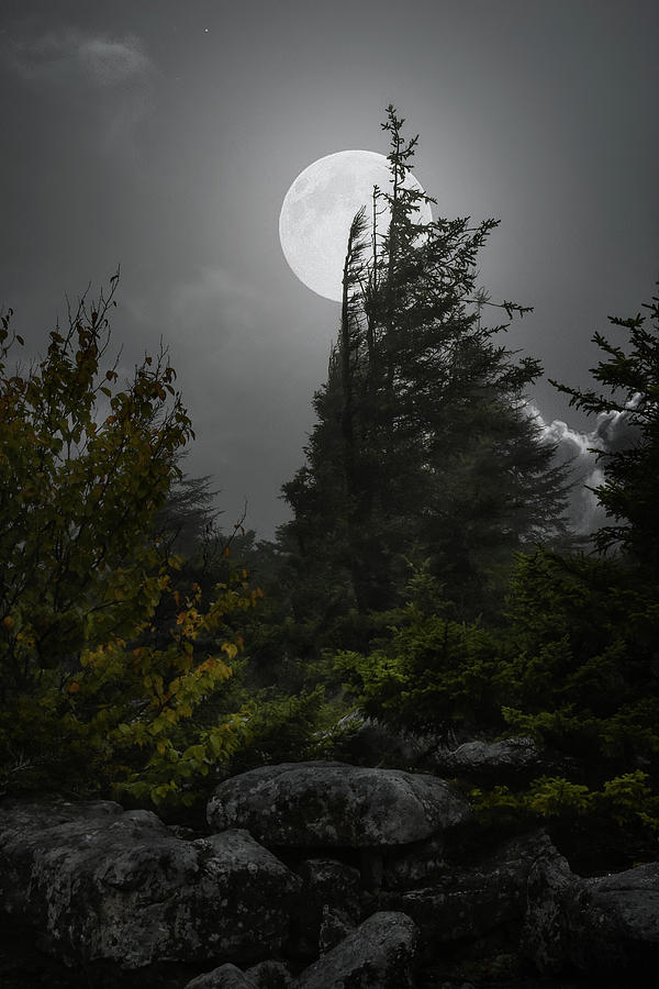 Whispers of the Moon by Lj Lambert