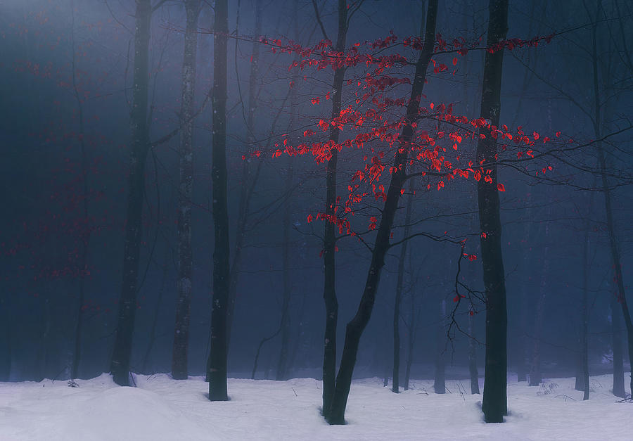 Whispers of Winter by Mikel Martinez de Osaba