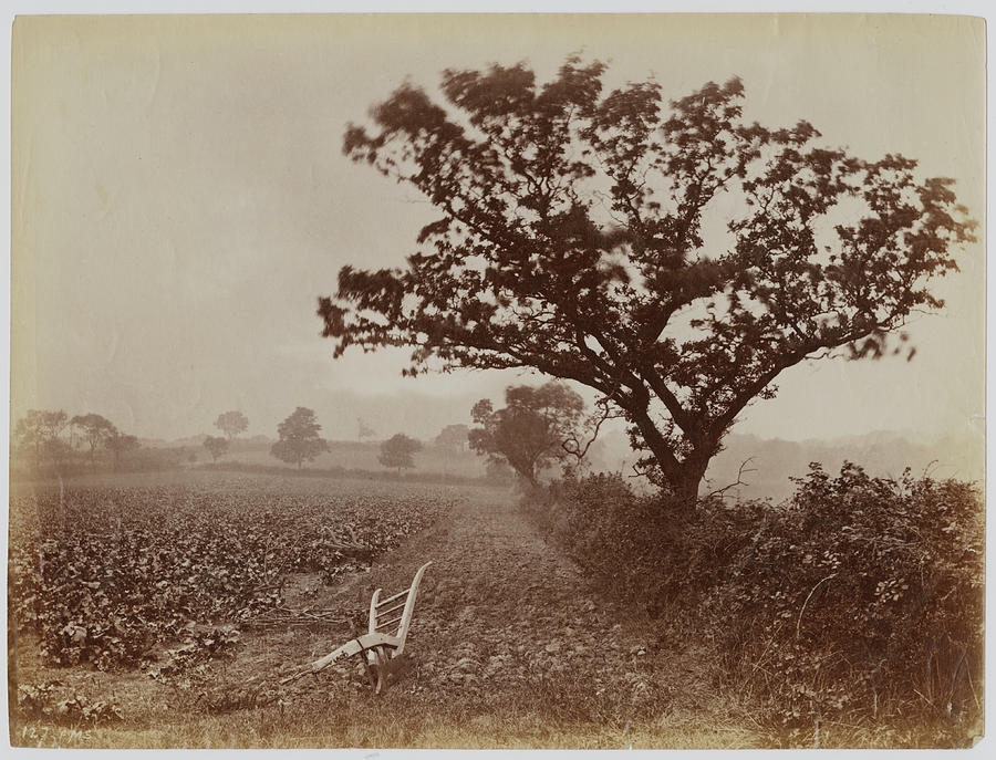 Whitby Field Photograph by Frank Meadow Sutcliffe