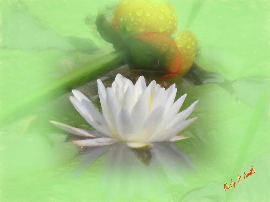 White and yellow water lilies. by Rusty R Smith