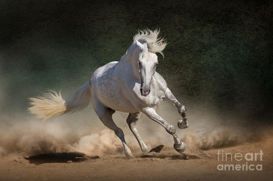 Strong Photograph - White Andalusian Horse In Desert Dust by Callipso