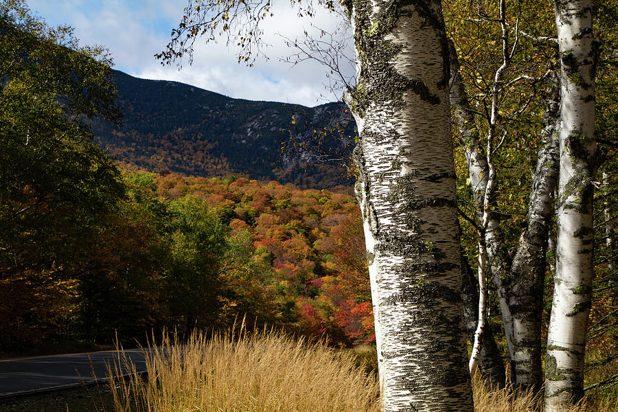 White Birch against Grafton fall colors by Jeff Folger