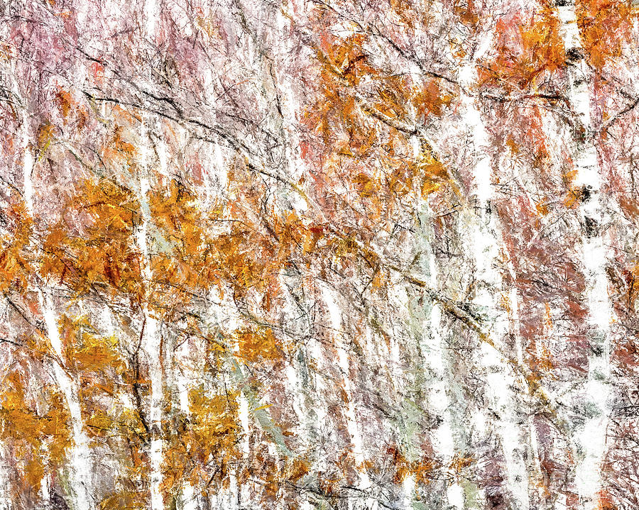 White Birches  by Susan Cole Kelly Impressions