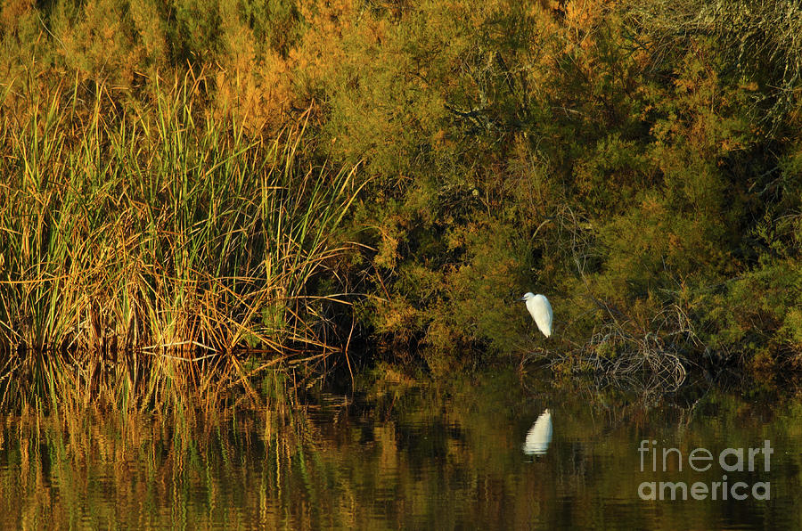 White Bird by the River by Angelo DeVal