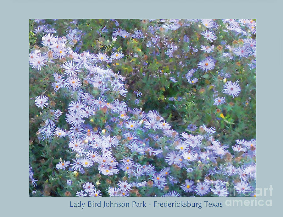 Blue Flowers Photograph - White Blue Cluster Poster by Felipe Adan Lerma