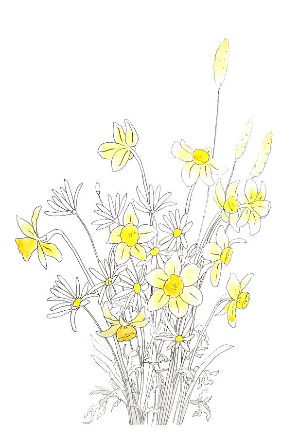 White Daisy And Yellow Daffodils Ink And Watercolor Painting By Color Color