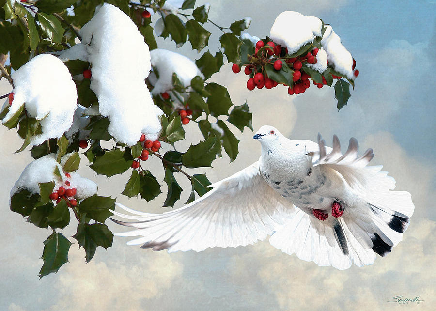 White Dove And Holly Digital Art by M Spadecaller