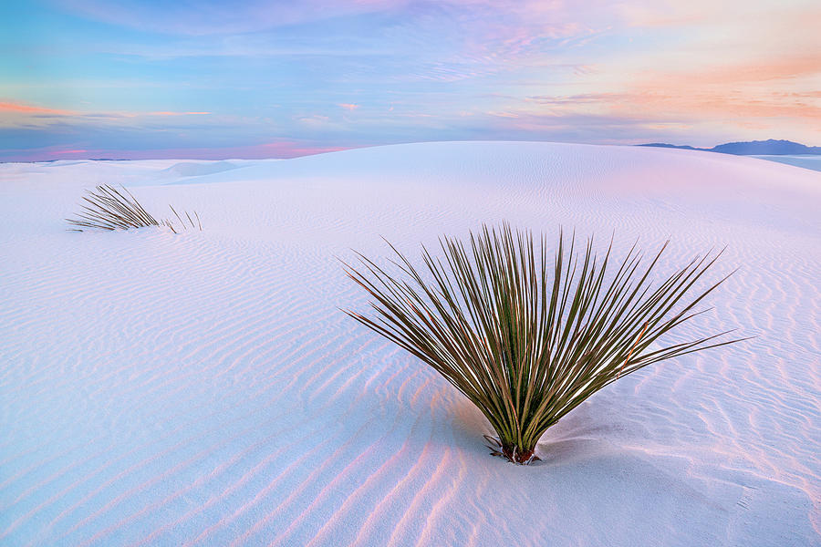 White Dunes, White Sands National Monument Photograph