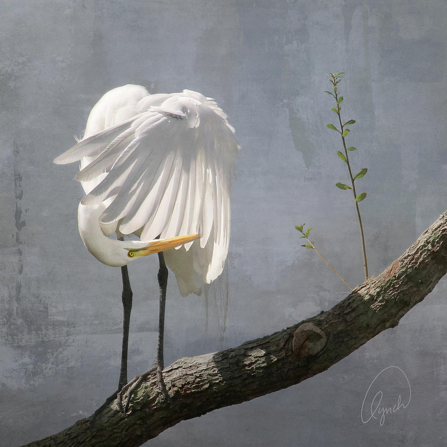 White Egret by Karen Lynch