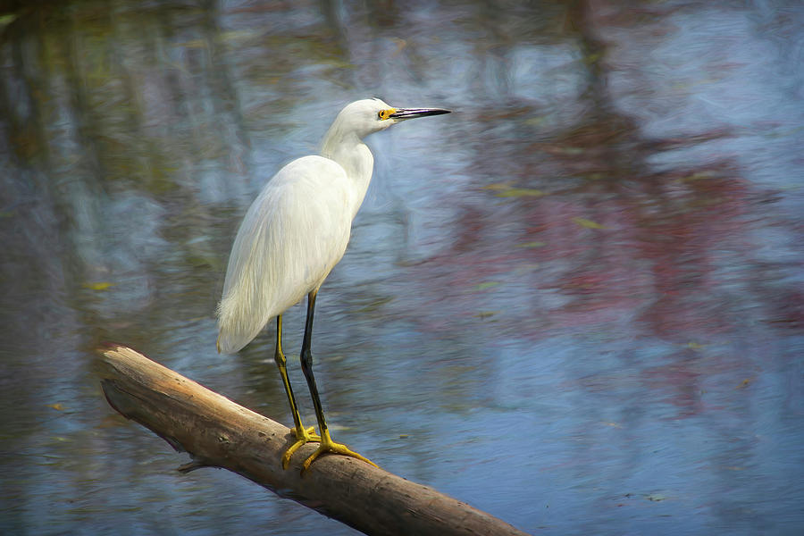 White Egret on a Log by Diana Haronis