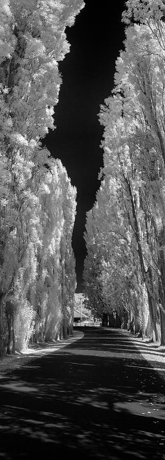 White Fall by Sean Davey