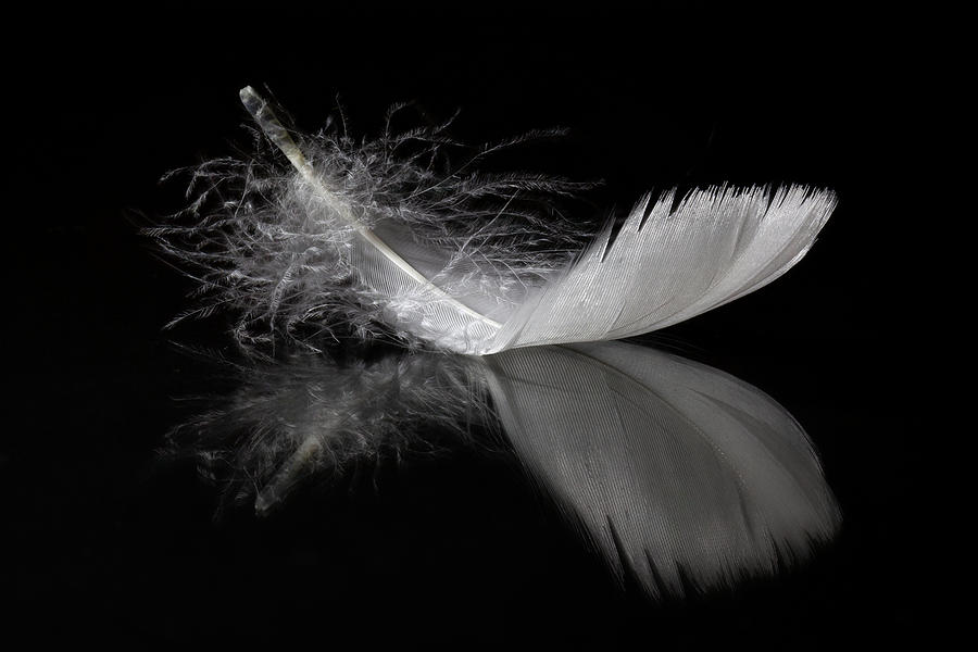White Feather Reflection by Tom Mc Nemar