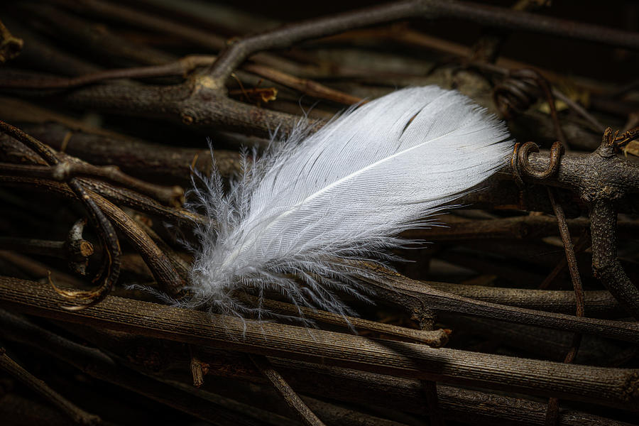White Feather by Tom Mc Nemar