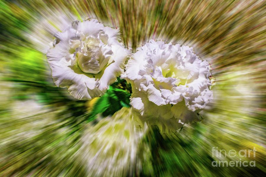White Flower Zoom by Nick Zelinsky