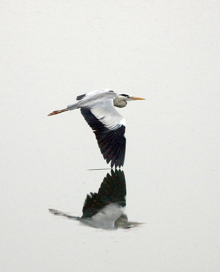 White Heron Photograph by Floridapfe From S.korea Kim In Cherl