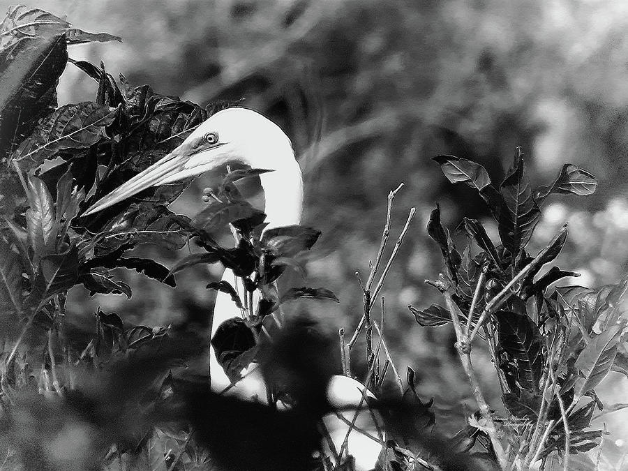 White Heron in the Bush - Black and White by Denise Winship
