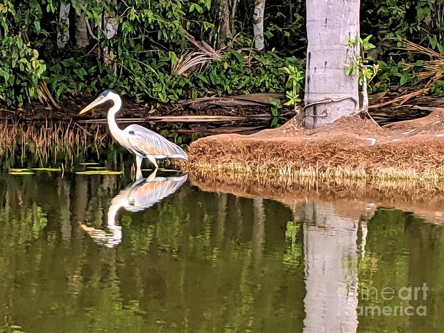 White Heron by Julie Pacheco-Toye