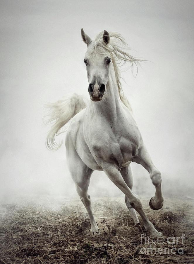 White Horse Running In Winter Mist Photograph By Dimitar Hristov