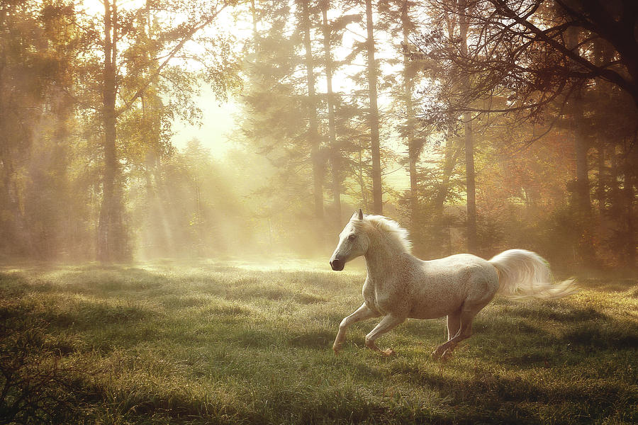 White Horse Running Photograph by Janneo
