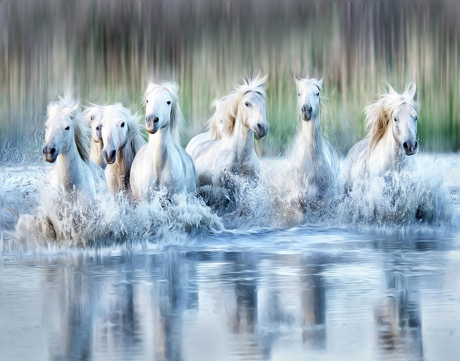 White Horses of the Camargue by Phyllis Burchett