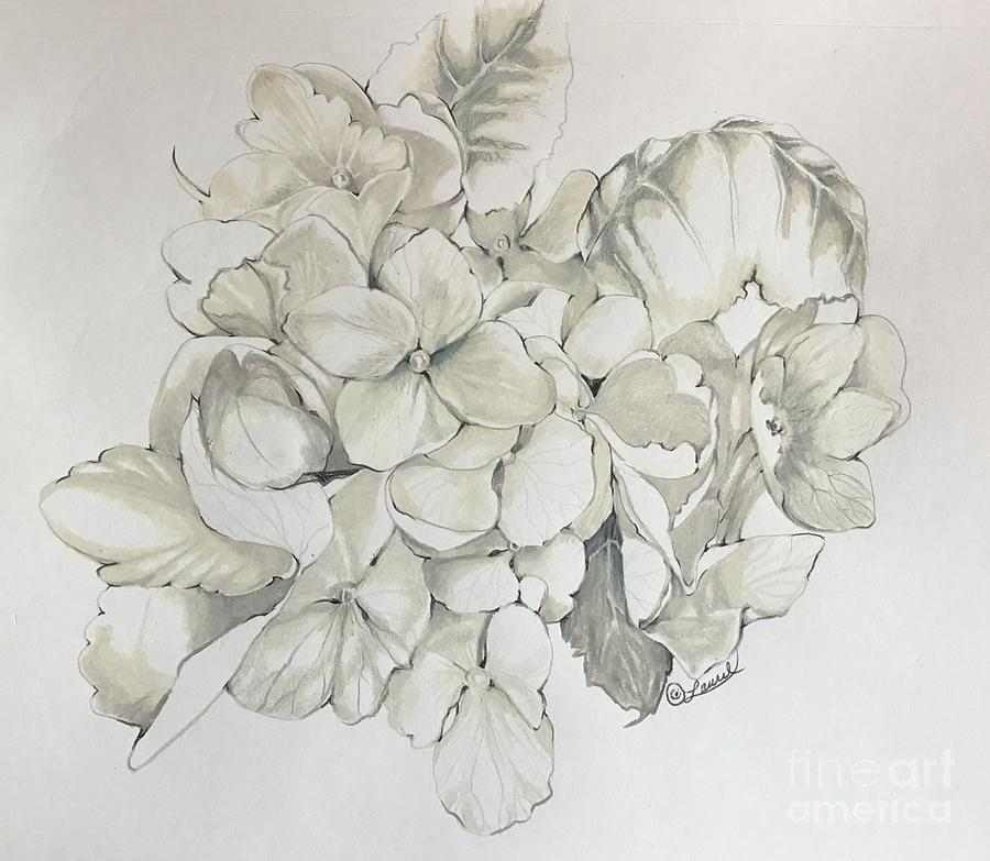 White Hydrangea detail by Laurel Adams