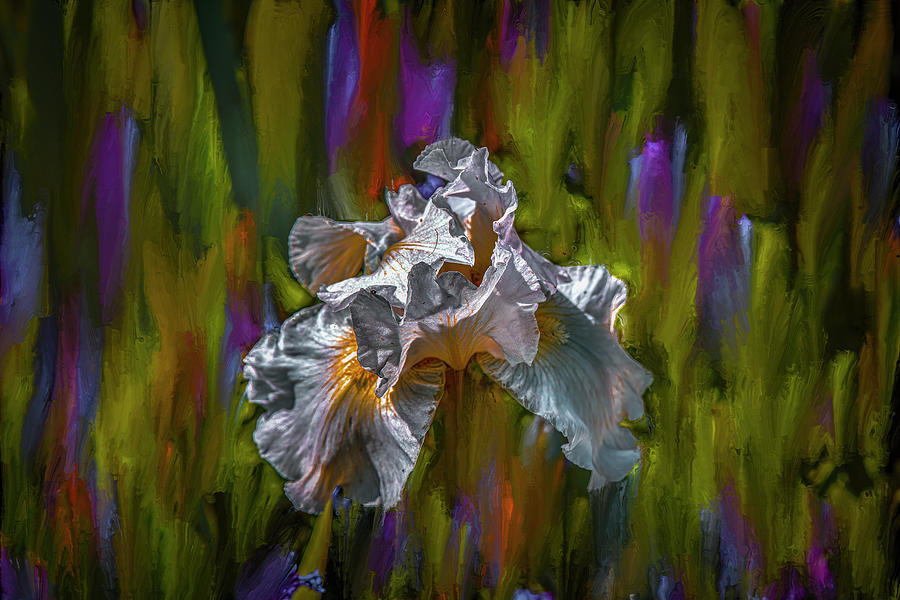 White iris dance #i8 by Leif Sohlman