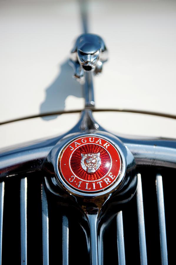 White Jaguar by Helen Northcott