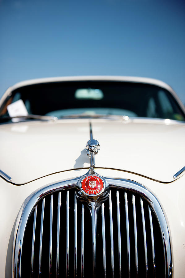 White Jaguar ii by Helen Northcott