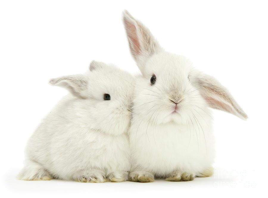 White Love Bunnies by Warren Photographic