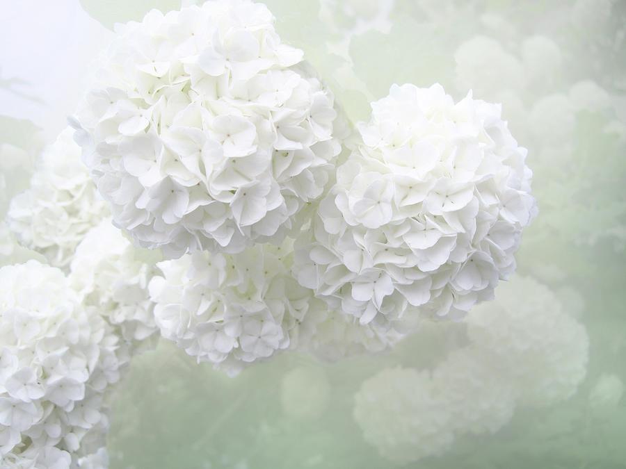 White Melancholy Photograph by Dima Lauzzana