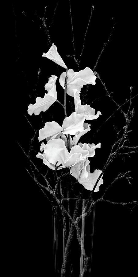 White on Black by Thomas Hall