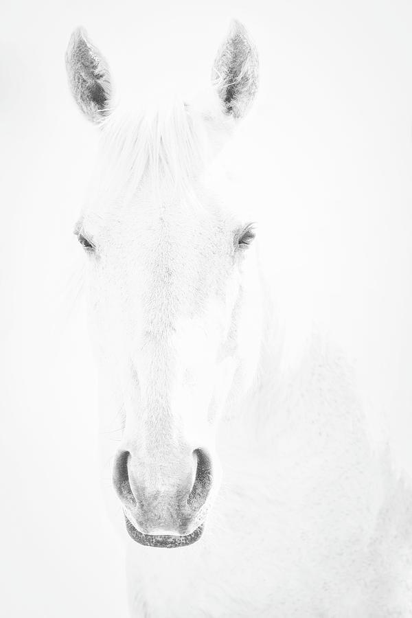 White on White by Denise LeBleu