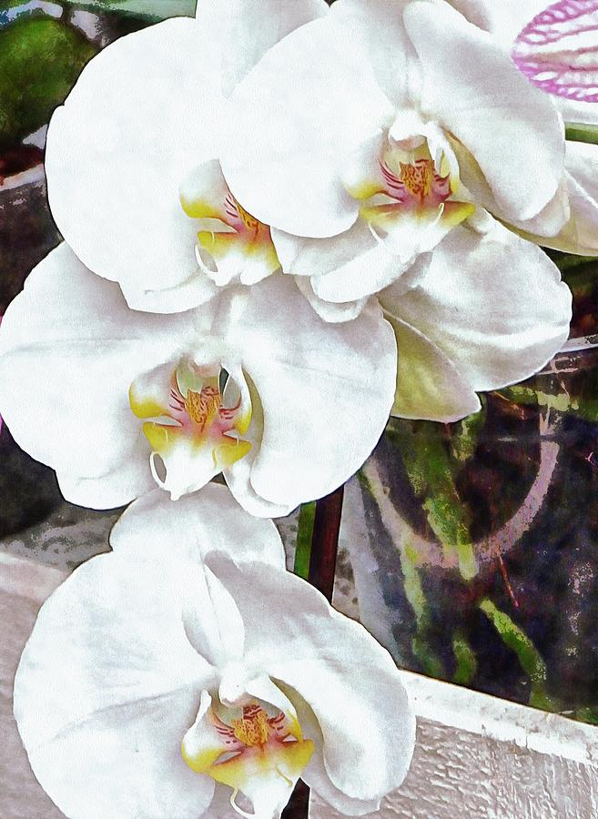 White Orchid Cascade by Dorothy Berry-Lound