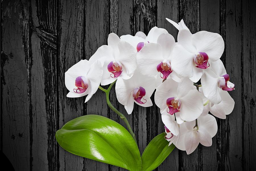 White Orchids On Wood Bark by Art Shack