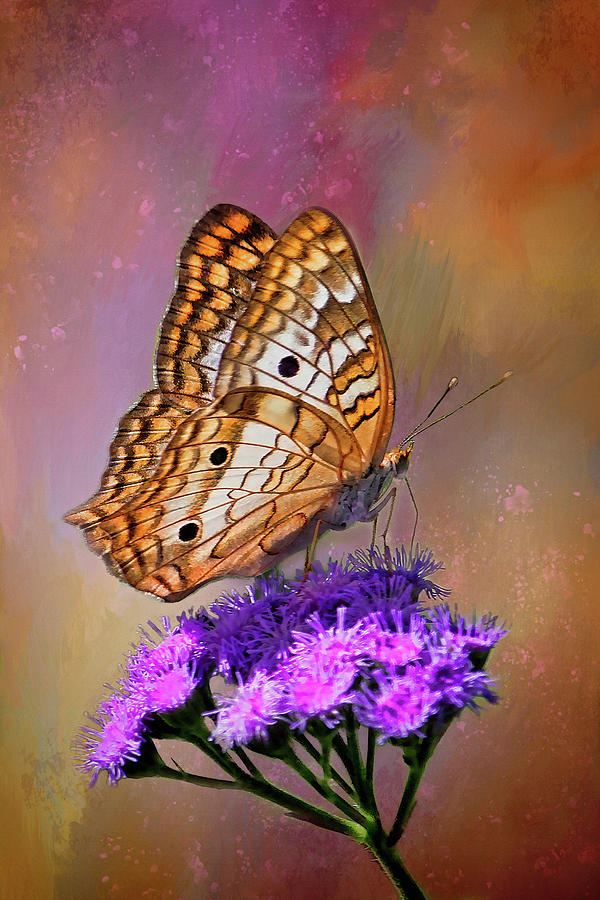 White Peacock Butterfly by HH Photography of Florida