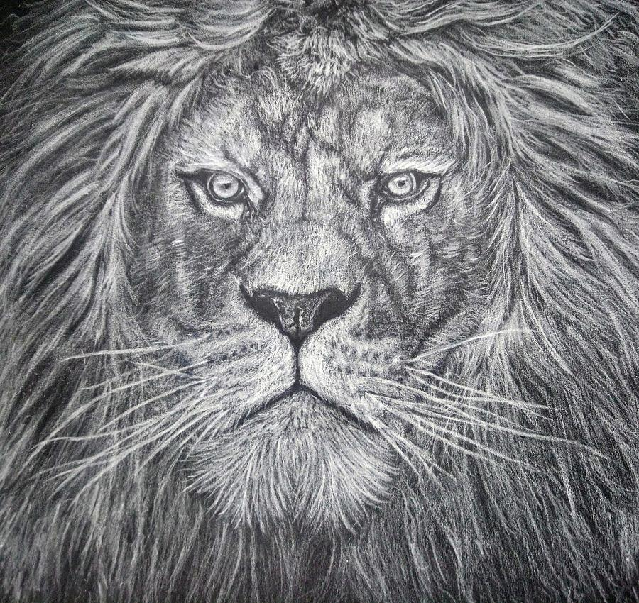 White Pencil Lion Drawing by Rachel Maytum Designs