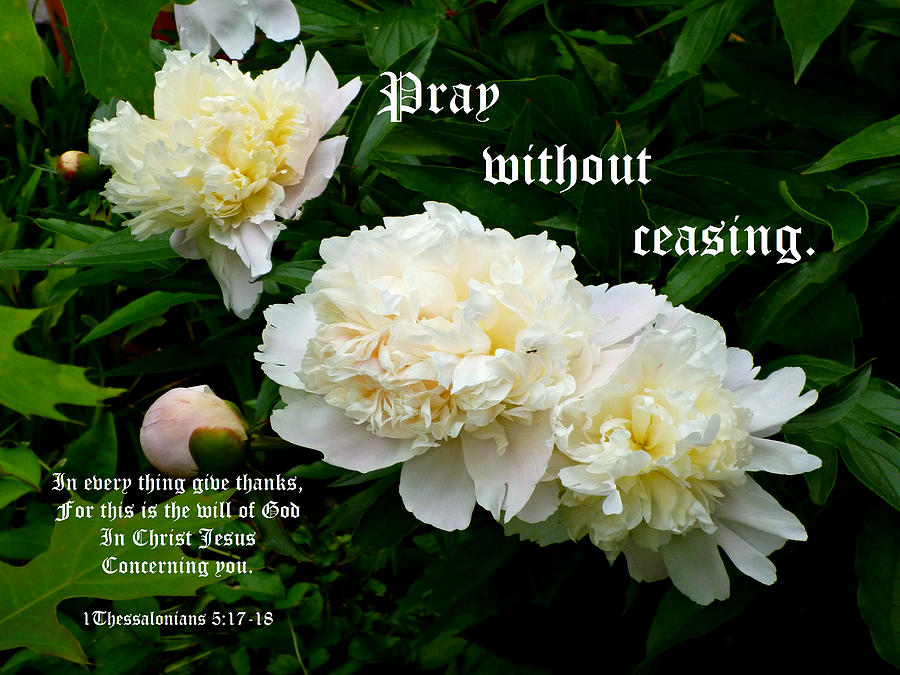 White Peonies Photograph - White Peony Trio With 1 Thessalonians 5 Vs 17 To 18 by Michael McBrayer