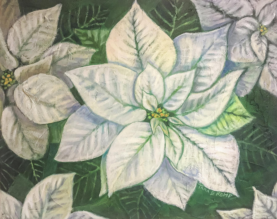 White Poinsettia by Tara D Kemp