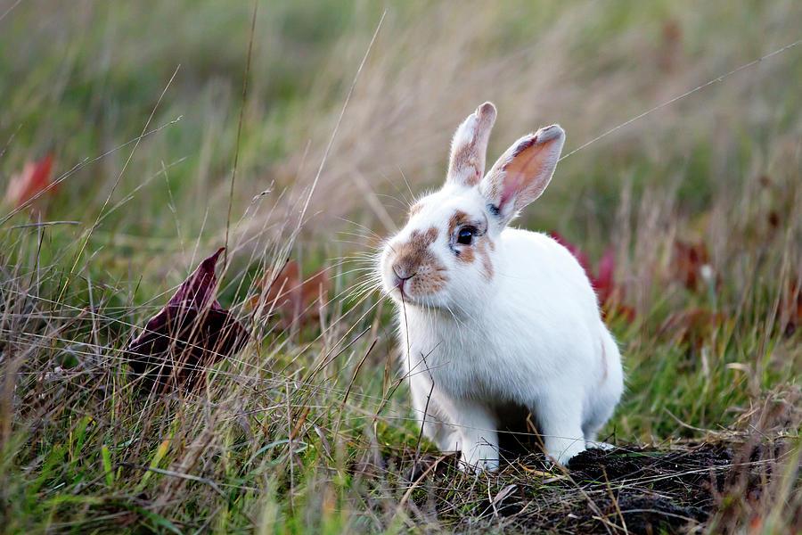 White Rabbit Photograph by Carmen Brown Photography