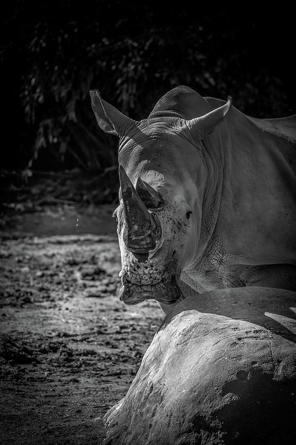 White Rhino by Rick Cooper