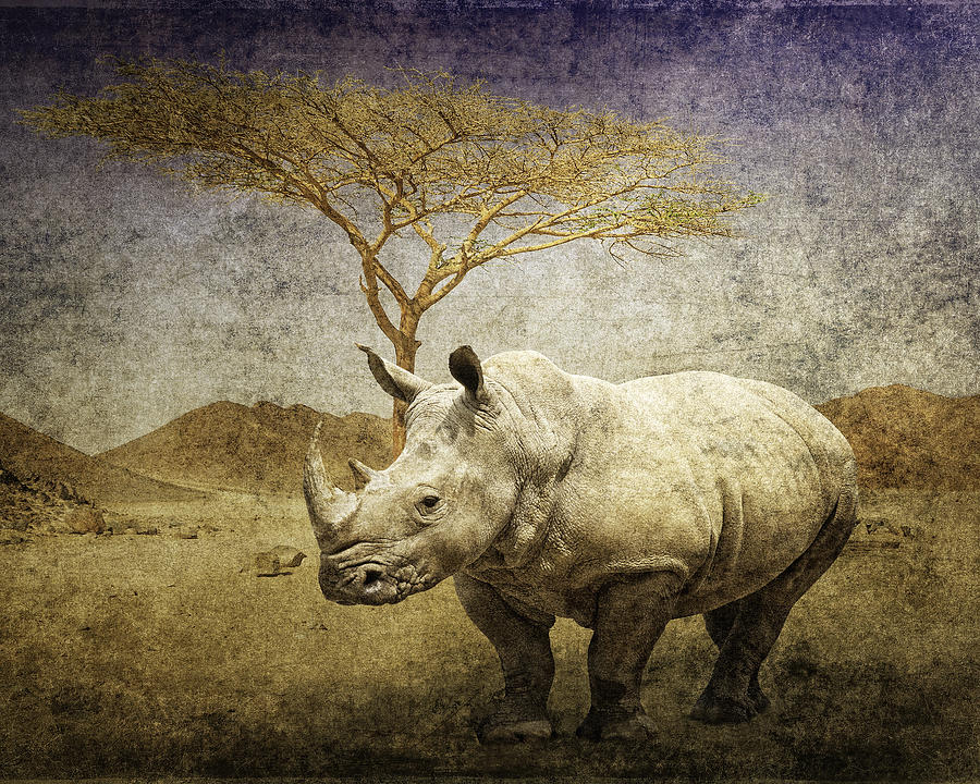 White Rhinoceros  by Sandra Selle Rodriguez