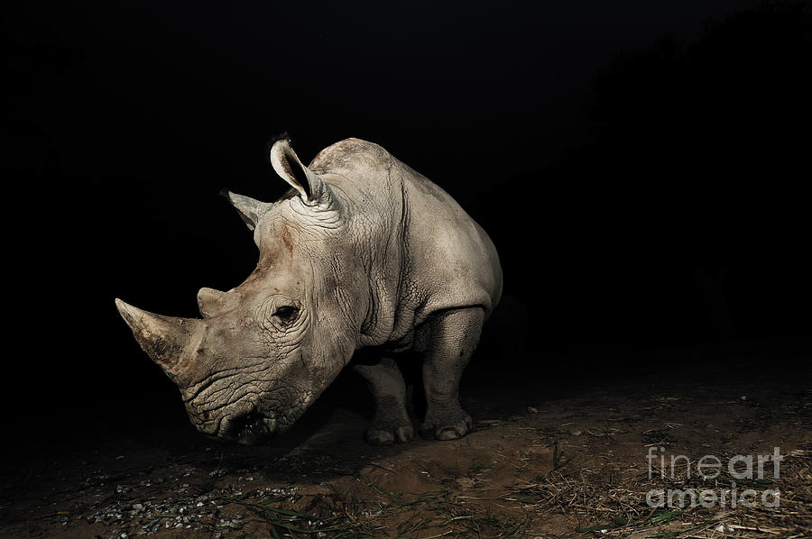 Big 5 Photograph - White Rhinoceros by Signature Message