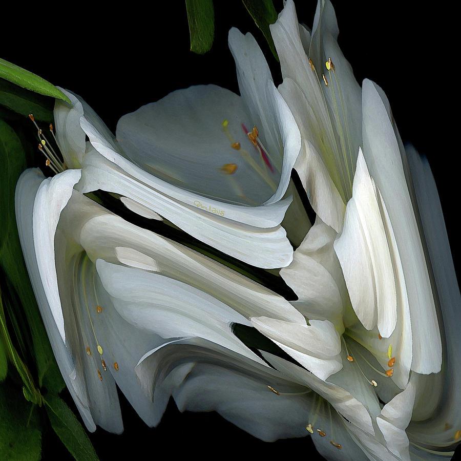 Flower Digital Art - White Rhododendron by Carel Schmidlkofer